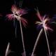 [:ja]よさこい祭り/高知市花火大会2019!渋滞回避の駐車場や穴場スポットを徹底紹介[:]