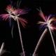 [:ja]赤平花火大会2018/あかびら火まつり!渋滞回避の駐車場や穴場スポットを徹底紹介[:]